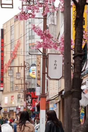 桜の先には「予約済」と書かれた看板が
